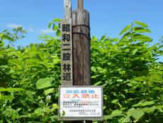昭和二股林道入口